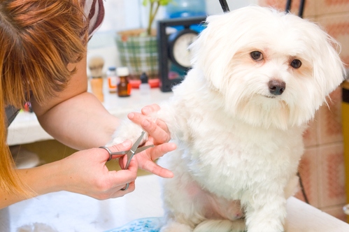 Pet grooming in Toronto